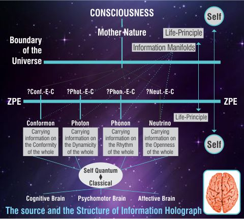 neuroscience consciousness research